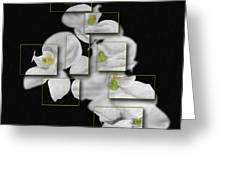 In And Out Of Focus 2 Greeting Card by Cecil Fuselier