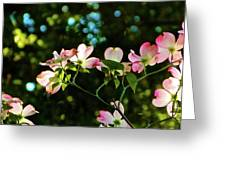 In Another Spring 2013 002 Greeting Card