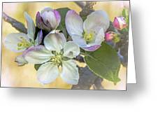 In Apple Blossom Time Greeting Card