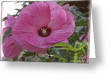 In Bloom - Pink Hibiscus Greeting Card