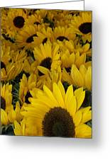In Full Bloom - Sunflowers Greeting Card