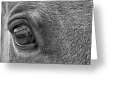 In Italian Cavallo View Greeting Card