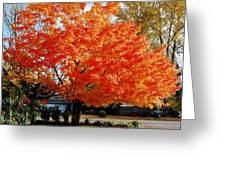 In Living Color Greeting Card