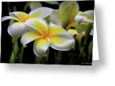 In Love With Butterflies Plumeria Flower Cecil B Day Butterfly Center Art Greeting Card