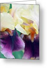 In Love With Iris Greeting Card