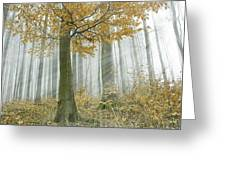 In Mist 1 Greeting Card
