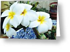 In My Courtyard  Greeting Card