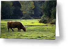 in New Forest Greeting Card