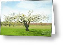 In Spring's Embrace Greeting Card