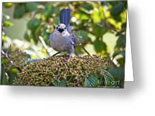 In The Catbird Seat Greeting Card