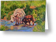 In The Creek Greeting Card