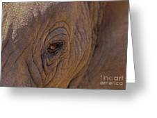 In The Eye Of The Elephant Greeting Card
