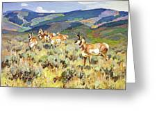 In The Foothills - Antelope Greeting Card