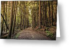 In The Forest Cathedral  Greeting Card