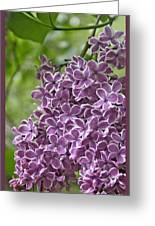 In The Garden. Lilac Greeting Card