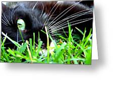 In The Grass Greeting Card