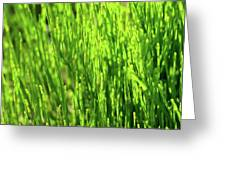 In The Green Greeting Card