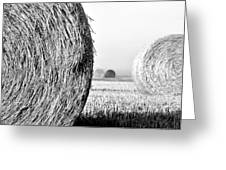 In The Hay -black And White Greeting Card
