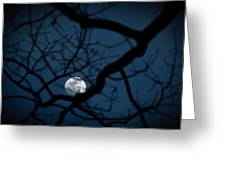 In The Light Of Night Greeting Card