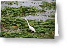 In The Lily Pads Greeting Card