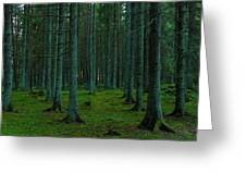 In The Middle Of The Forest Greeting Card
