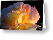 In The Morning Light Greeting Card