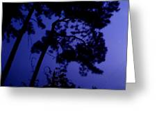 In The Pines Greeting Card