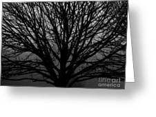 In Reach Of Mist Greeting Card