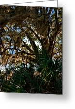 In The Shade Of A Florida Oak Greeting Card