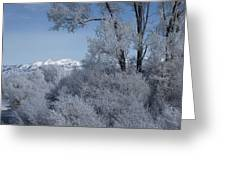 In The Shadows Of The Fog Greeting Card