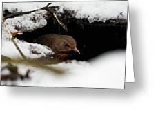 In The Shelder. Eurasian Blackbird Greeting Card
