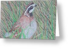 In The Tall Grass Greeting Card