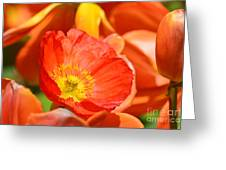 In The Tulip Garden Greeting Card