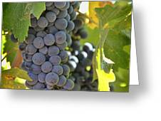 In The Vineyard Greeting Card by Nancy Ingersoll