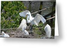 In The Wild White Snowy Egrets Photography ....photo A Greeting Card