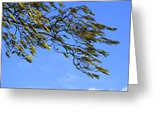 In The Wind Greeting Card