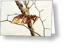 In The Winter Breeze Greeting Card