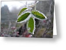 In The Winter Sunlight Greeting Card
