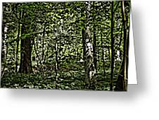 In The Woods Wc Greeting Card