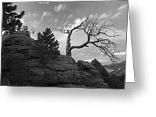 In Time There Is Motion Black And White  Greeting Card by James Steele