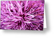 In Your Face Purple Greeting Card