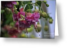 Incredible Fuschia Greeting Card