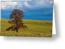 Independant Greeting Card