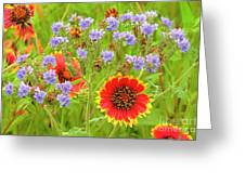 Indian Blanketflowers Gaillardia Puchella Greeting Card