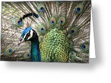 Indian Blue Peacock Puohokamoa Greeting Card