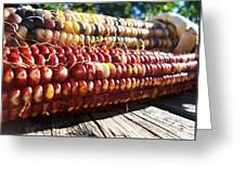 Indian Corn On The Cob Greeting Card
