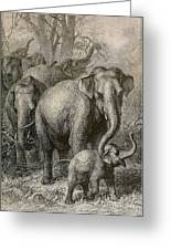 Indian Elephant, Endangered Species Greeting Card
