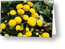 Indian Mums - Yellow Chaamanthi Greeting Card