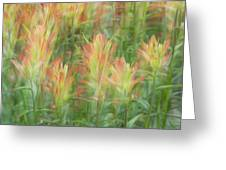 Indian Paint Brush Blurr  Greeting Card