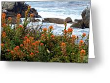 Indian Paintbrush At Point Lobos Greeting Card